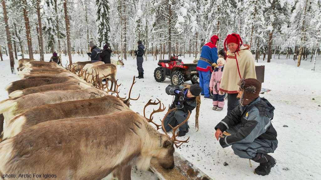 Vaara reindeer Farm